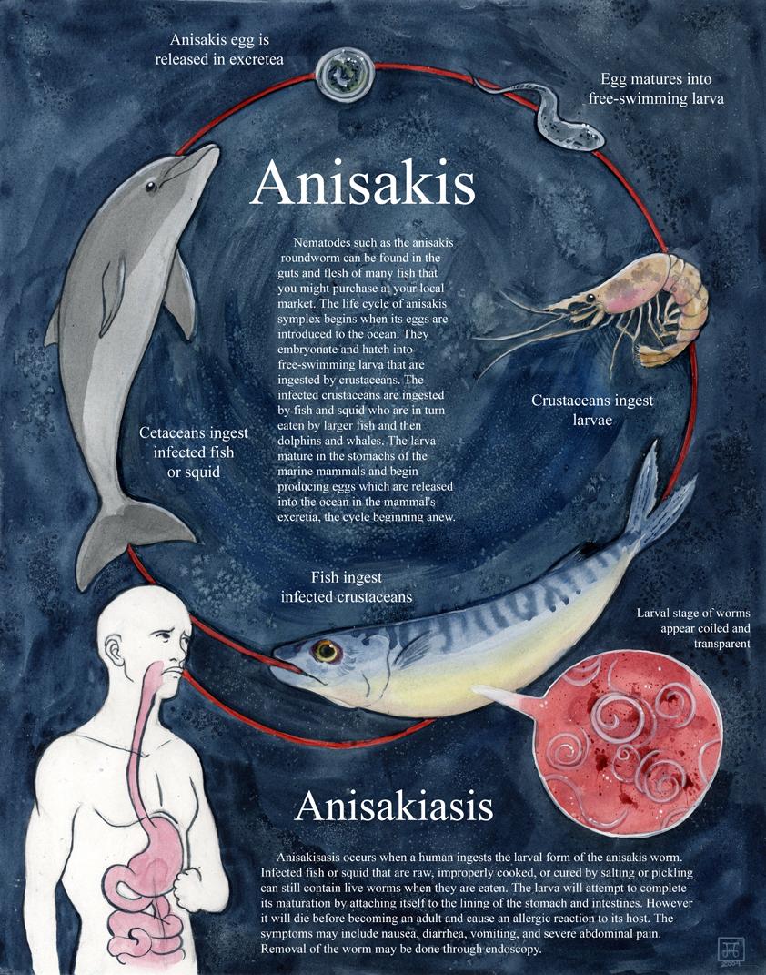 Anisakiscycle